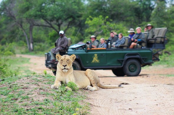royal-malewane-game-drive-game-drive